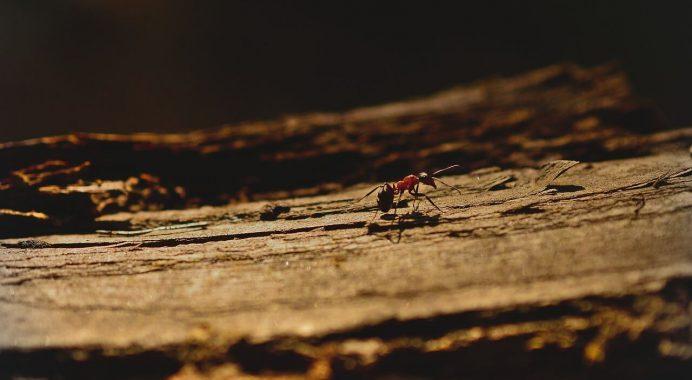 Best Carpenter Ant Bait Archives 7routertables